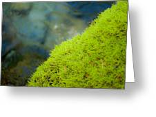 Moss On River Greeting Card