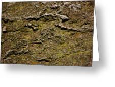 Moss On Rock Greeting Card