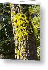 Moss On Tree Along Sentinel Dome Trail In Yosemite Np-ca Greeting Card