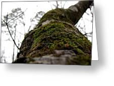 Moss Greeting Card