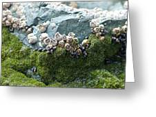 Mossy Barnacles Greeting Card