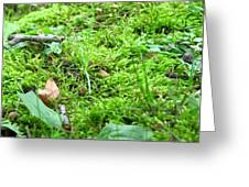 Mossy Bed Greeting Card