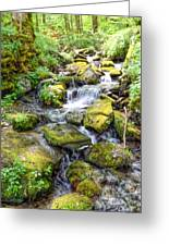 Mossy Creek Greeting Card by Bob Jackson