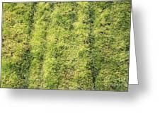 Mossy Grass Greeting Card