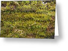 Mossy Green Greeting Card