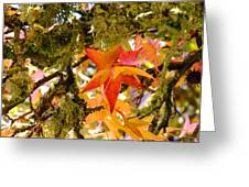 Mossy Lichen Tree Leaves Art Prints Autumn Greeting Card