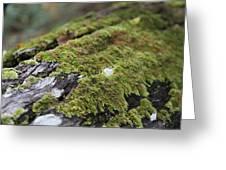 Mossy Log Greeting Card