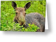 Mossy Moose Greeting Card