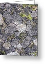 Mossy Mouldy Rock Texture Greeting Card