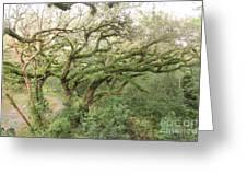 Mossy Oak Greeting Card