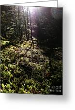 Mossy Patch Greeting Card by Steven Valkenberg
