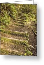 Mossy Path Greeting Card