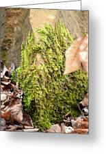 Mossy Rock Abstract 2013 Greeting Card