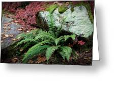 Mossy Rock And Fern Greeting Card