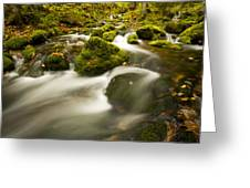 Mossy Rocks Along Lavis Brook In The Greeting Card