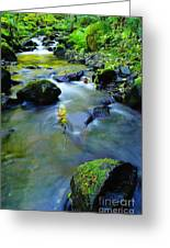 Mossy Rocks And Moving Water  Greeting Card