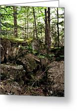 Mossy Rocks In The Forest Greeting Card