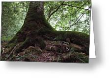 Mossy Roots Greeting Card