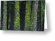 Mossy Sentinels Greeting Card