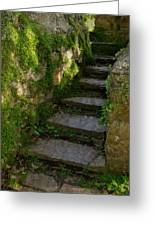 Mossy Steps Greeting Card by Carla Parris