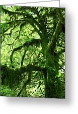 Mossy Tree Greeting Card by Athena Mckinzie