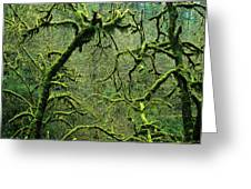 Mossy Trees Leafless In The Winter Greeting Card