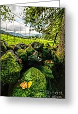 Mossy Wall Greeting Card