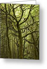 Mossy Welsh Forest  Greeting Card