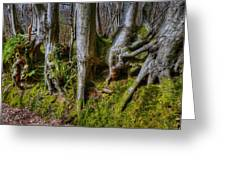 Mossy Woodland  Greeting Card
