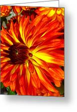 Mostly Orange Dahlia Flower Greeting Card