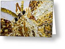 Moth A Million Pieces Greeting Card