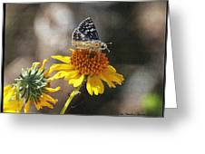 Moth And Flower Greeting Card