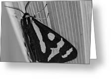 Moth Bw Macro Greeting Card