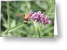 Moth On Flowers Greeting Card