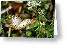 Moth On White Flower Greeting Card
