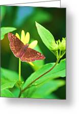 Moth On Yellow Greeting Card