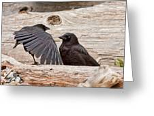 Mother And Baby Crow At The Beach Greeting Card