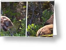 Mother And Baby Moose Greeting Card