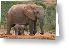 Mother And Calf Greeting Card
