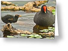 Mother And Chick Greeting Card