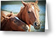 Mother And Filly Greeting Card
