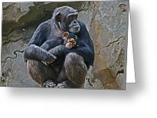 Mother And Child Chimpanzee Greeting Card
