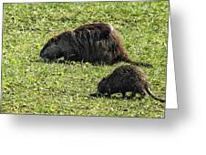 Mother And Child - Coypu - Nutria Greeting Card