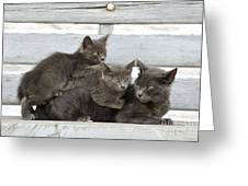 Cat And Kittens Greeting Card