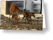 Mother And Two Fawn II Greeting Card
