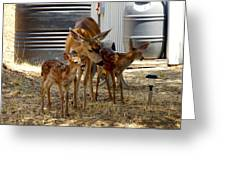 Mother And Two Fawn IIi Greeting Card