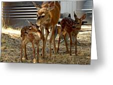 Mother And Two Fawn  Greeting Card