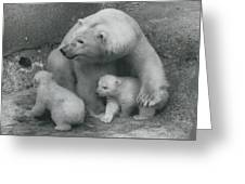 Mother Bear Shows Off Her Twin Babies. Tiyak And Tineak - Greeting Card