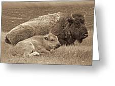 Mother Buffalo And Calf Sepia Greeting Card