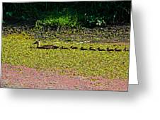 Mother Duck And Baby Ducks Greeting Card
